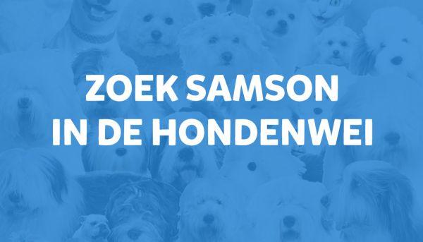 Zoek Samson in de hondenwei!